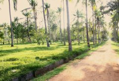 thai-Massage-course-in-mysore-with-accommodation-7.jpg